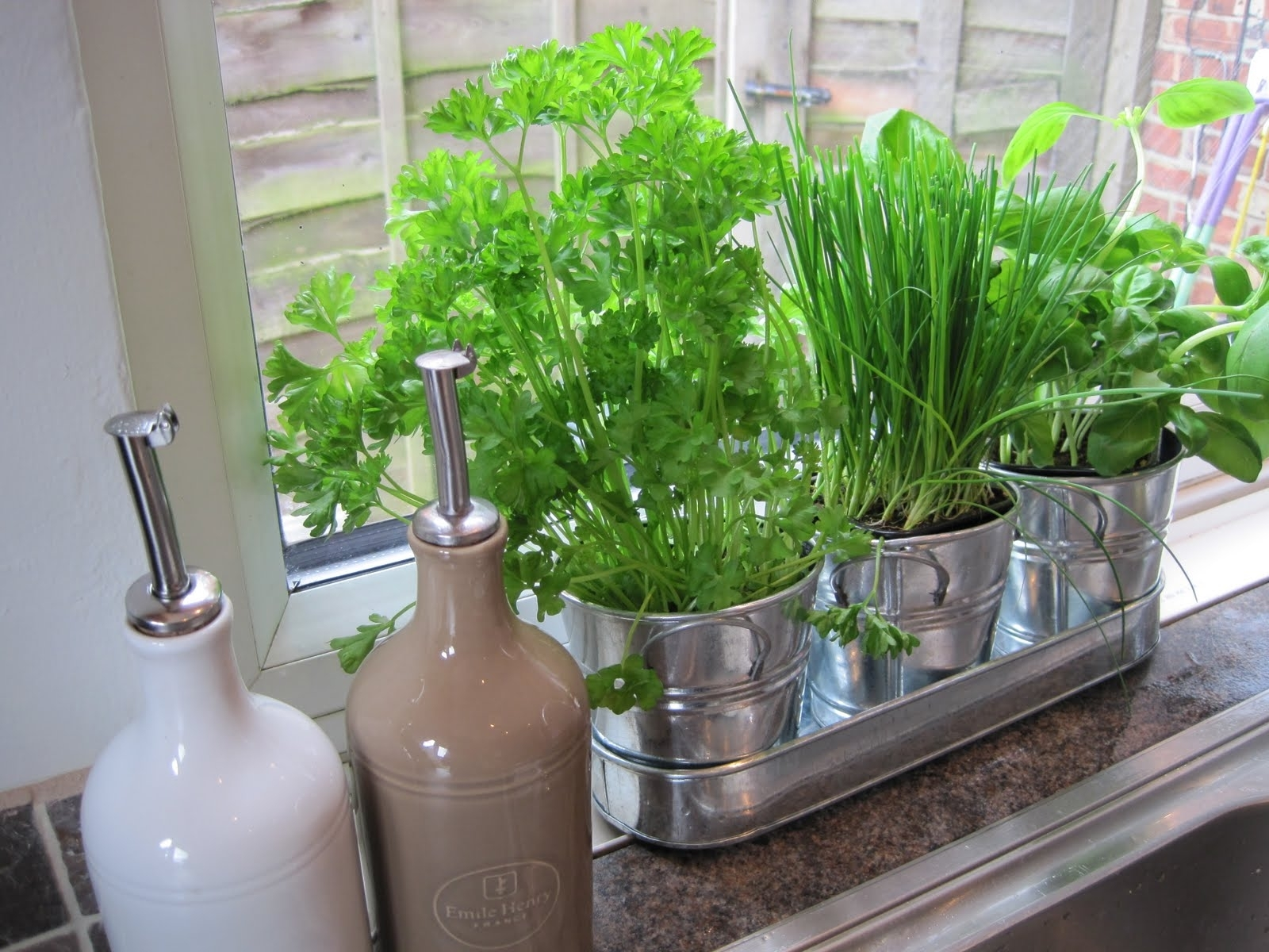 10 Pictures Of Vegetable Gardening In Containers in Apartment Kitchen Garden