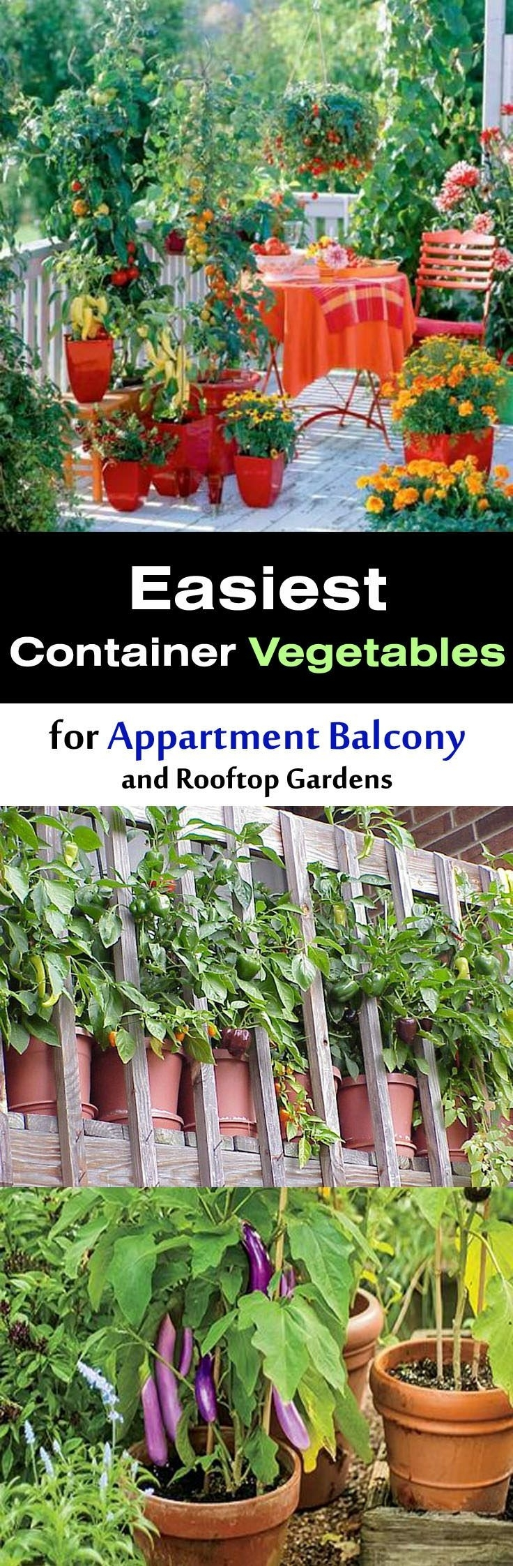17 best ideas about apartment vegetable garden on pinterest within the best ideas for sunset garden