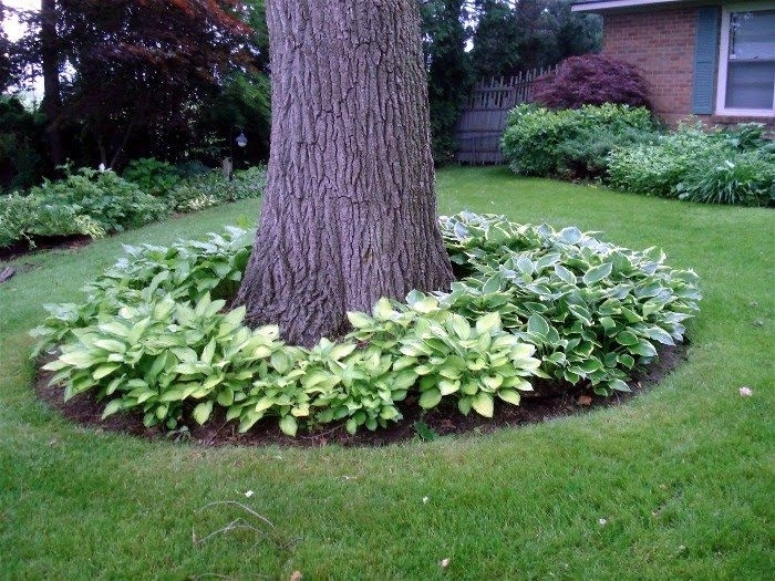 17 Best Ideas About Front Yard Landscaping On Pinterest   Yard throughout Landscaping Ideas For Front Yard Trees