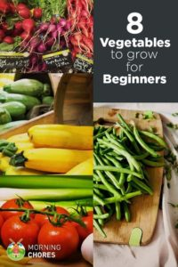 25+ Best Ideas About Growing Vegetables On Pinterest | How To Grow in Garden Of Light Natural Foods Avon Ct