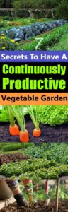 25+ Best Ideas About Growing Vegetables On Pinterest   How To Grow intended for Garden Of Light Natural Foods Avon Ct