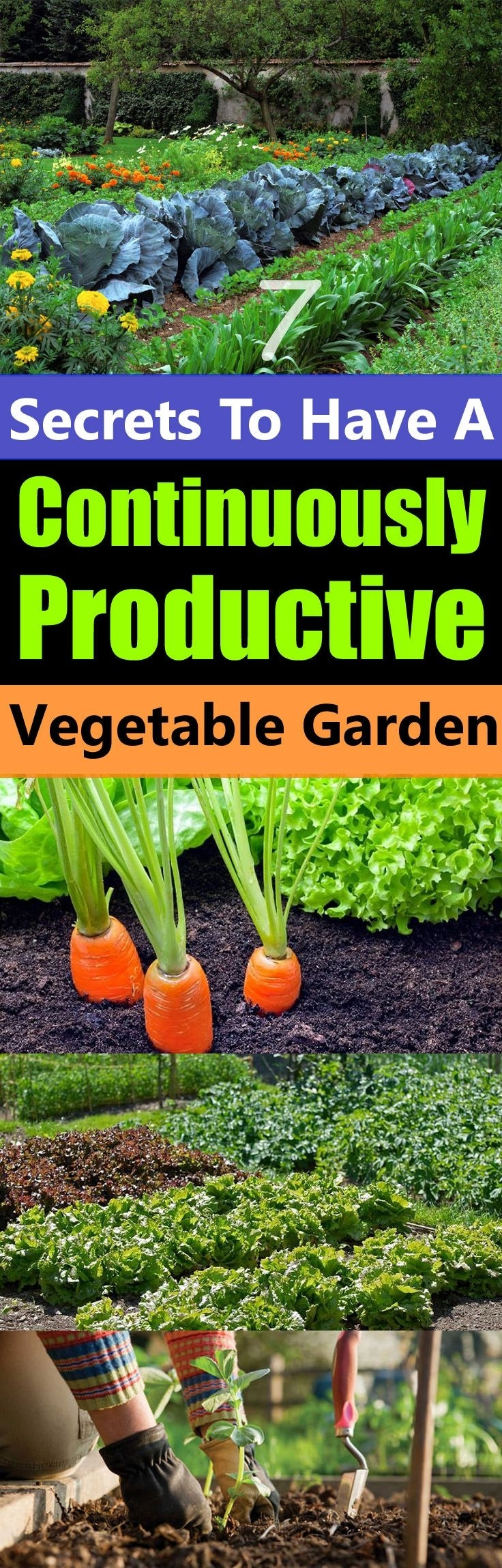 25+ Best Ideas About Growing Vegetables On Pinterest | How To Grow intended for Garden Of Light Natural Foods Avon Ct