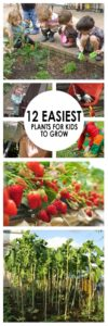 25+ Best Ideas About Planting Plants On Pinterest   Growing Plants intended for Garden Of Light Natural Foods Avon Ct