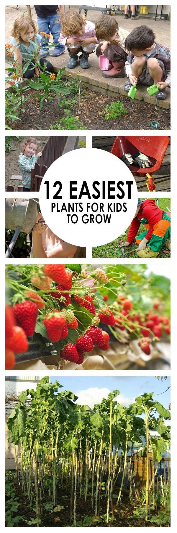 25+ Best Ideas About Planting Plants On Pinterest | Growing Plants intended for Garden Of Light Natural Foods Avon Ct