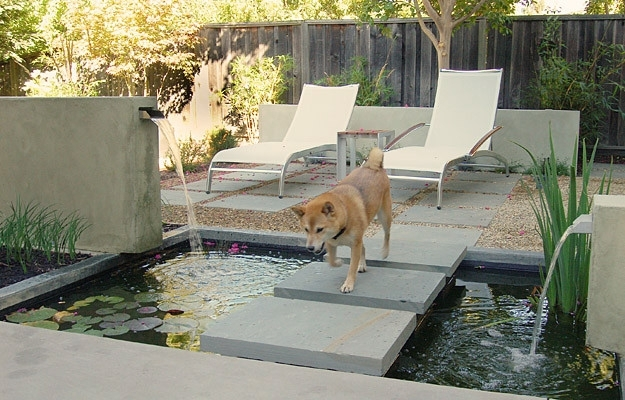 9 Best Landscaping Ideas For Small Backyards With Dogs   Walls within Small Backyard Landscaping Ideas For Dogs