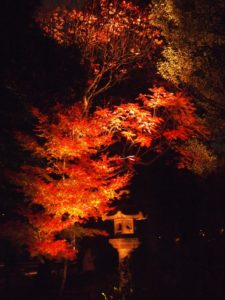 Rikugien Autumn Light Up | Life To Reset with Rikugien Garden Autumn Light Up