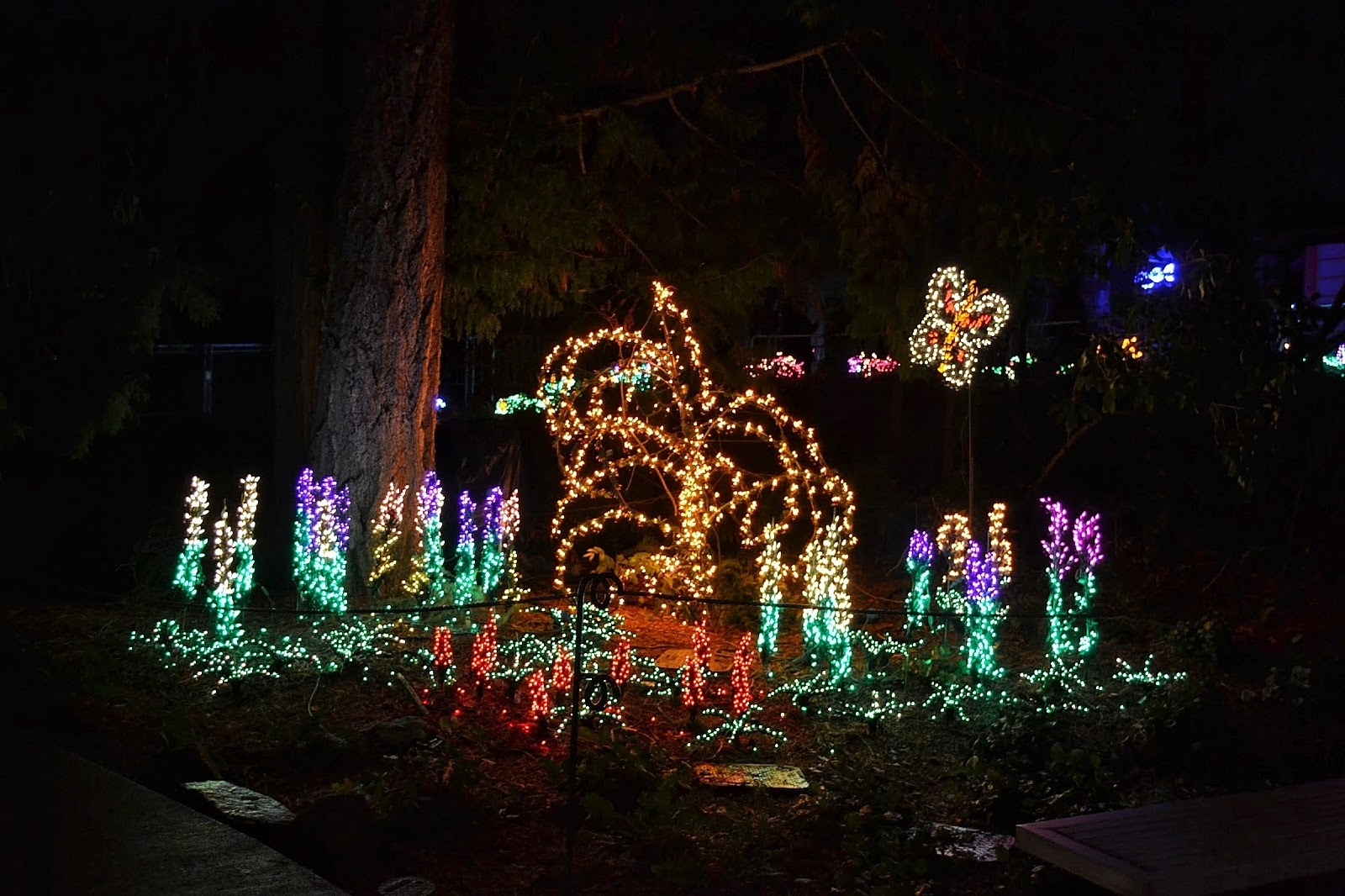 The Outlaw Gardener: Garden D'lights At Bellevue Botanical Garden pertaining to Garden Light In Bellevue Wa