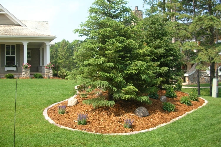 Trees For Landscaping Ideas For Front Yard for Landscaping Ideas For Front Yard Trees