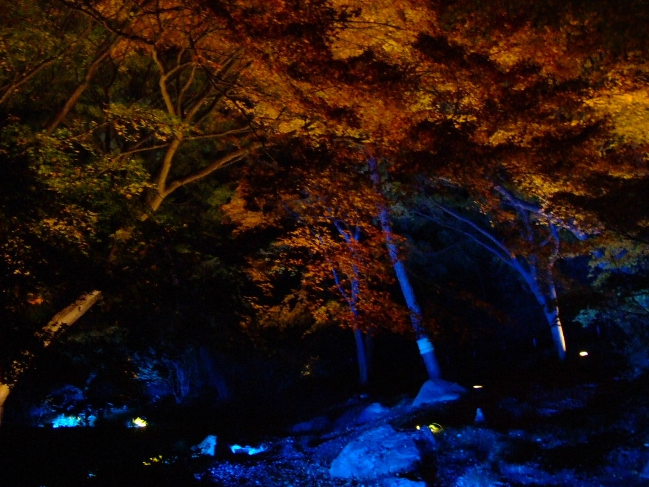 Walking With Lee: Lighting-Up Autumn Leaves In Rikugien Garden in Rikugien Garden Autumn Light Up