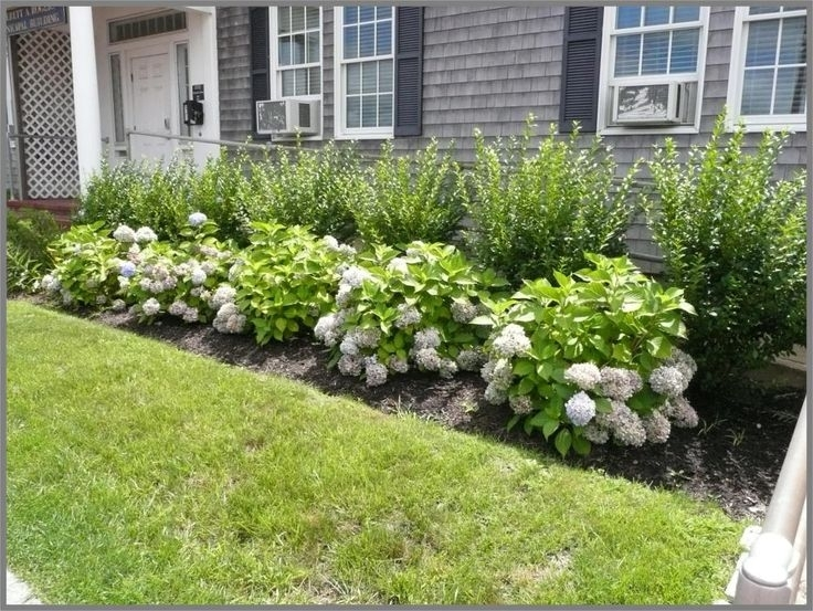 10+ Best Ideas About Foundation Planting On Pinterest | Front with regard to Landscaping Ideas For Front Yard Shrubs