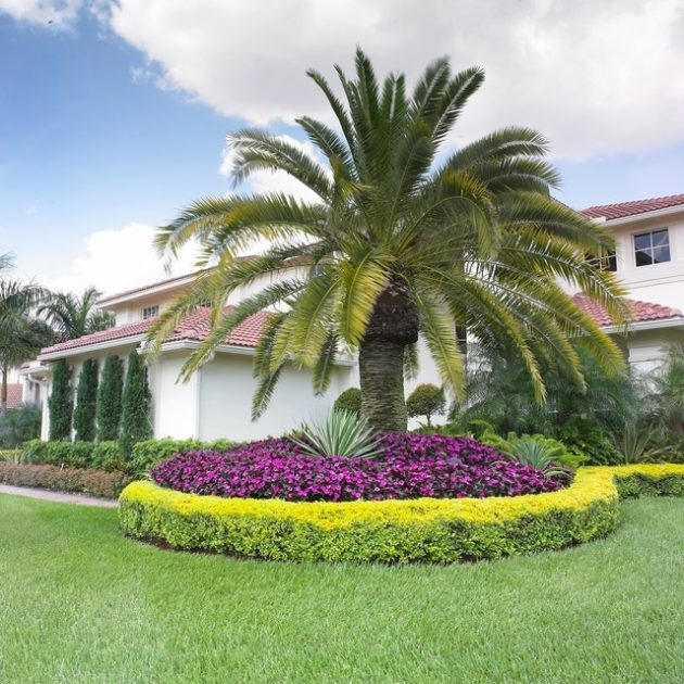 Exceptional Ideas To Decorate Your Landscape With Palm Trees regarding Landscaping Ideas For Front Yard With Palm Trees