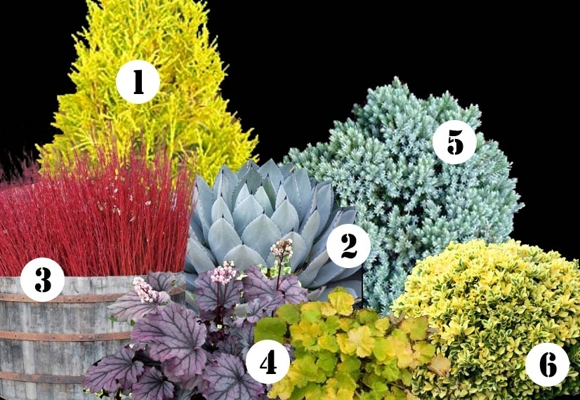 My Front Yard Landscape Plan This Year & Ideas For Year-Round within Landscaping Ideas For Front Yard Shrubs