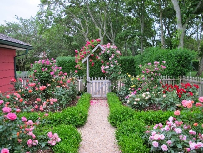 11 Beautiful Rose Garden Designs For Small Yard - Homelilys Decor intended for Rose Garden Designs For Small Yard