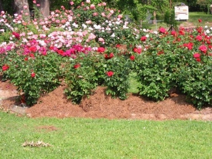 17 Best Images About Rose Garden On Pinterest with regard to Rose Garden Designs For Small Yard