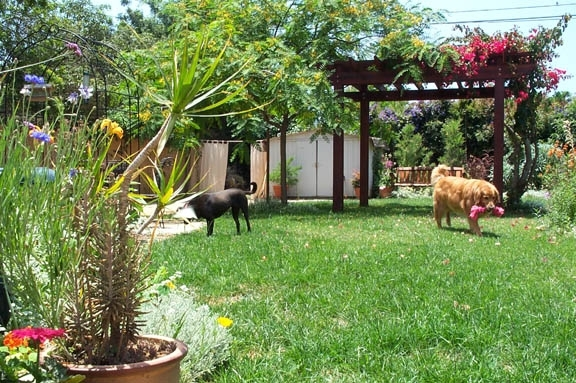 9 Best Landscaping Ideas For Small Backyards With Dogs | Walls in Landscaping Ideas For Small Yards With Dogs