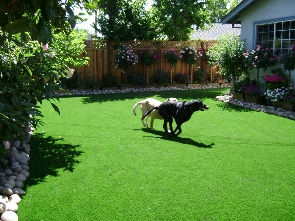 Best 25+ Dog Friendly Backyard Ideas On Pinterest | Build A Dog with Landscaping Ideas For Small Yards With Dogs