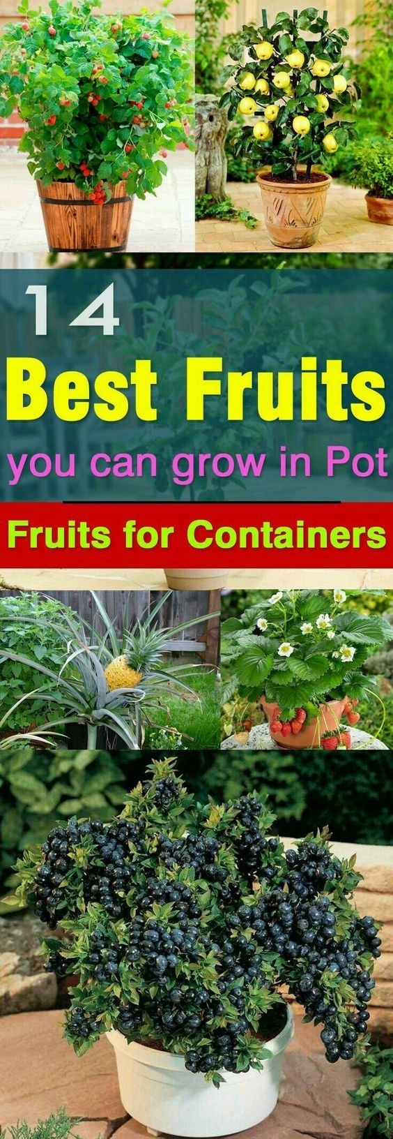 Best 25+ Small Vegetable Gardens Ideas On Pinterest   Raised pertaining to Best Layout For Woodland Garden Apartments Design Ideas
