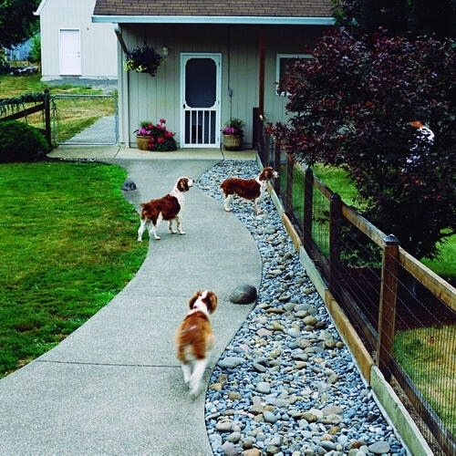 Top Dog Friendly Backyards   Healthy Paws intended for Landscaping Ideas For Small Yards With Dogs