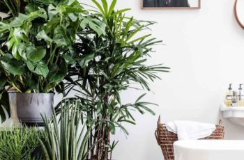 Best 10+ Indoor Plant Decor Ideas On Pinterest | Plant Decor for Best Design Ideas For Palm Garden Apartments