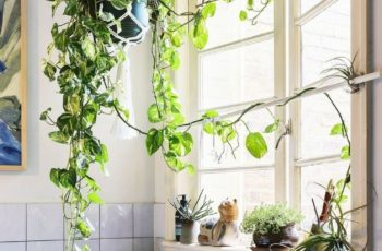 Best 25+ Ivy Apartments Ideas On Pinterest | Bedroom With Plants regarding Best Layout For Ivy Garden Apartments Design Ideas