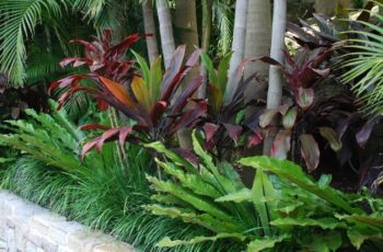 Best 25+ Tropical Landscaping Ideas Only On Pinterest | Tropical with regard to Best Design Ideas For Palm Garden Apartments