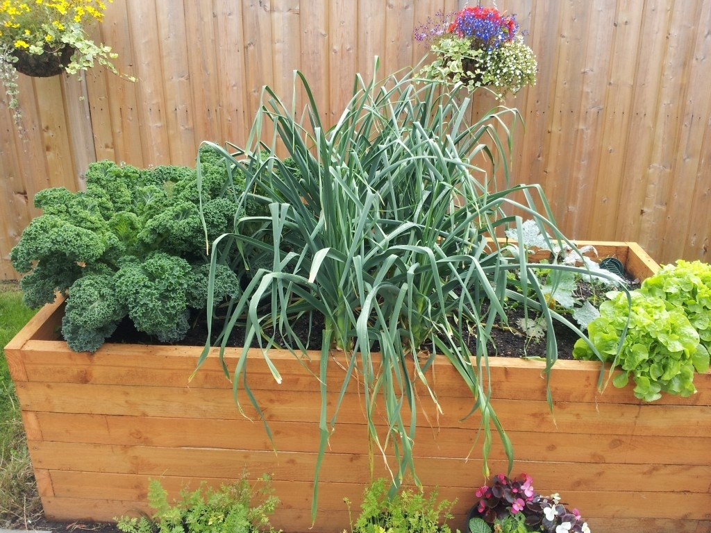 14 Vegetables To Grow In A Small Gardengreenside Up intended for Backyard Garden What To Grow