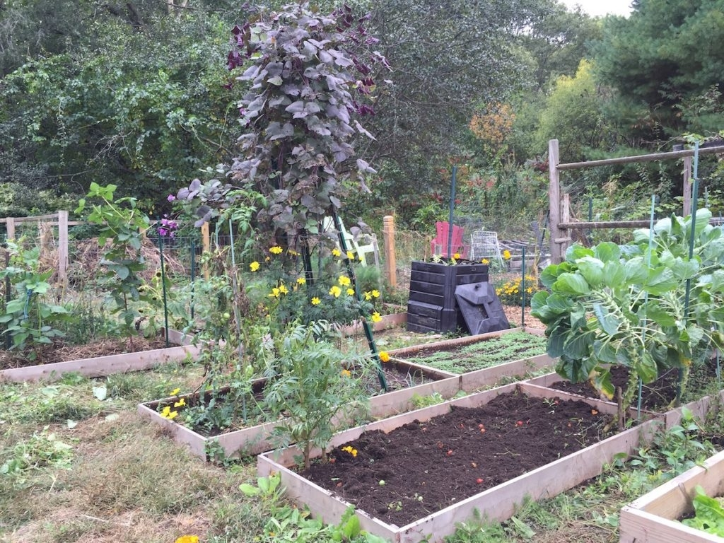 At The Plot Raised Garden Cover Crop Crops Winter Img 0164 Bed with regard to Backyard Garden Cover Crop