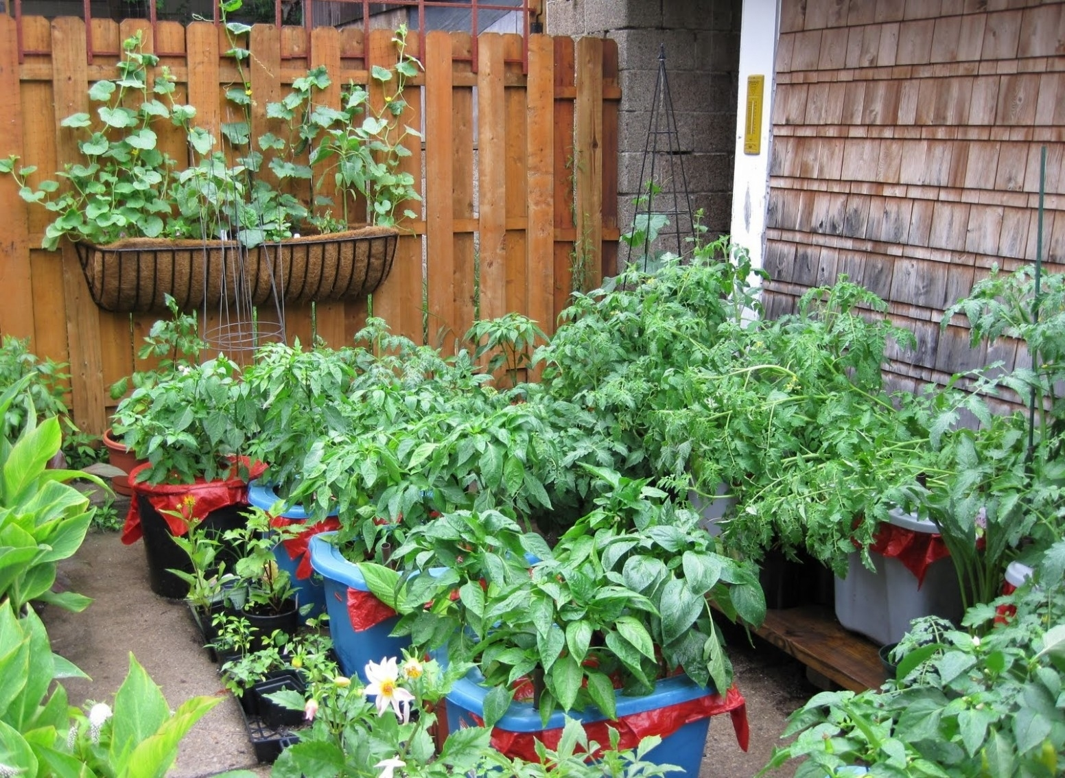 Backyard Container Vegetable Garden Ideas Gardening With Fall Best with regard to Backyard Container Vegetable Garden Ideas