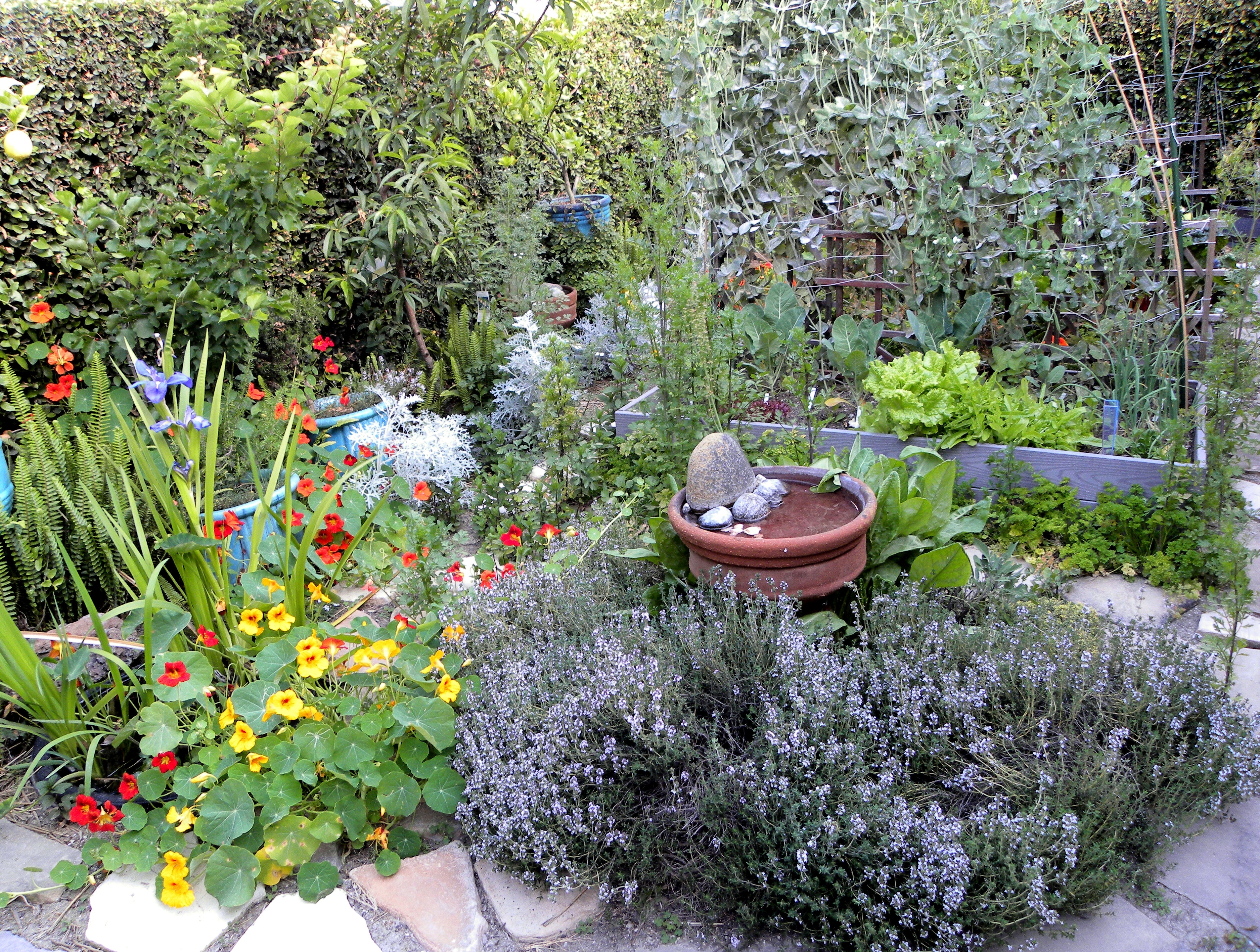 Backyard Herb Garden Ideas » Photo Gallery Backyard inside Backyard Herb Garden Ideas