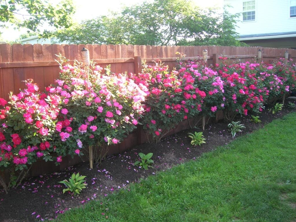Backyard Rose Garden | Decorating Clear for Backyard Rose Garden Plans