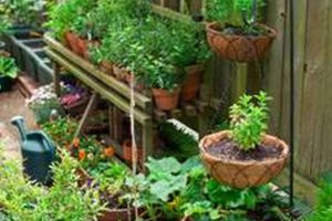Backyard Vegetable Garden Philippines » Backyard And Yard Design For in Backyard Vegetable Garden Philippines