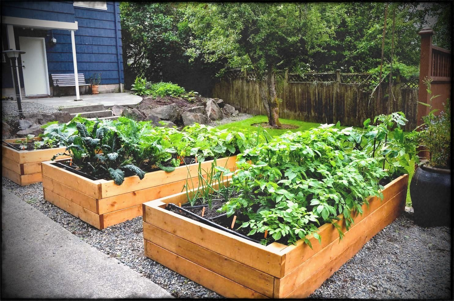 Backyard Container Vegetable Garden Ideas - Garden Design