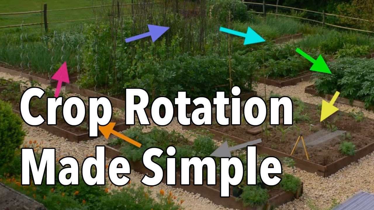 Crop Rotation Made Simple - Rotate Your Vegetable Beds For Healthier throughout Backyard Garden Crop Rotation