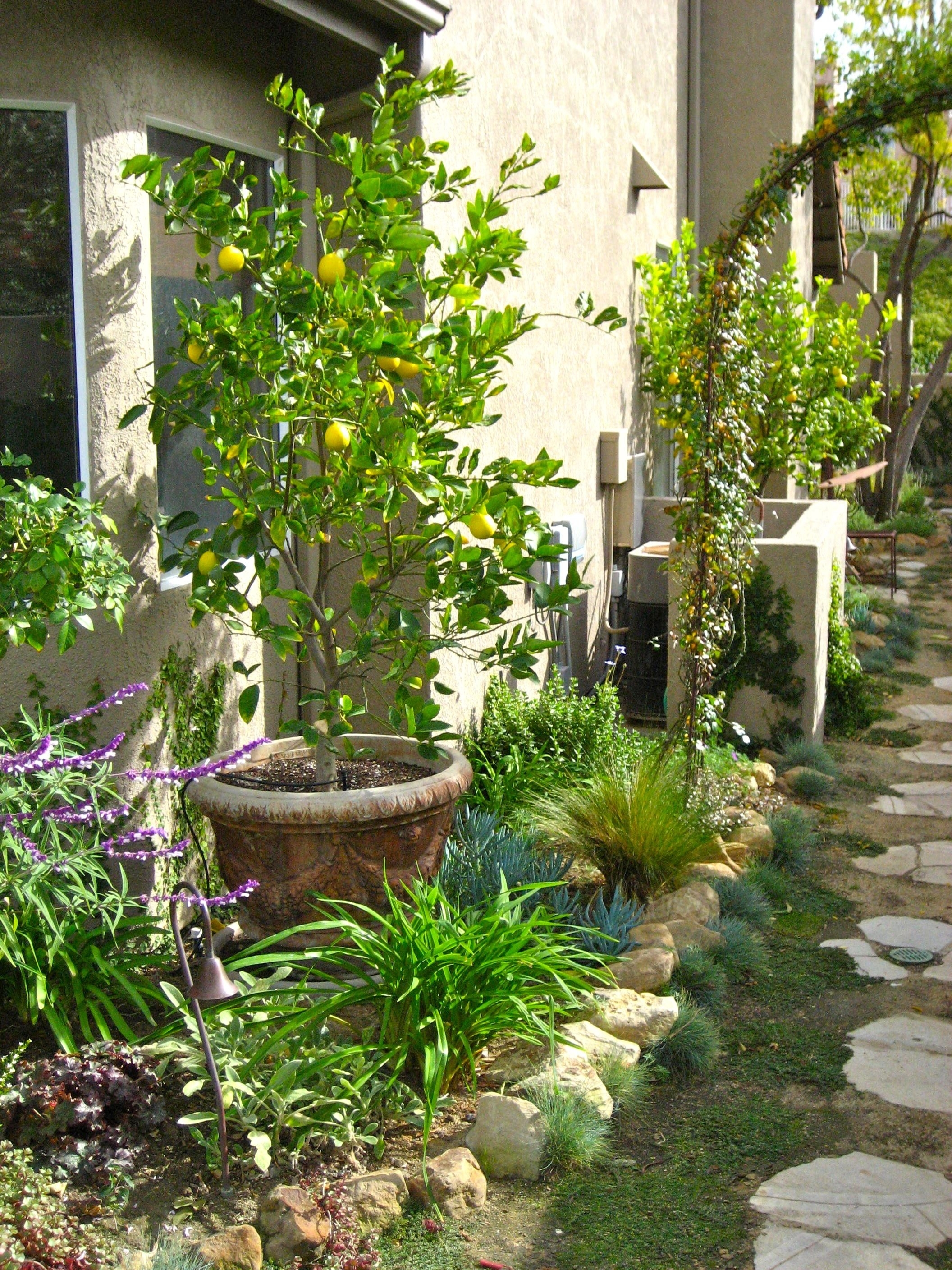Dwarf Citrus Trees Planted In Containers Within The Small Garden Bed within Backyard Garden Center Arcadia Wi