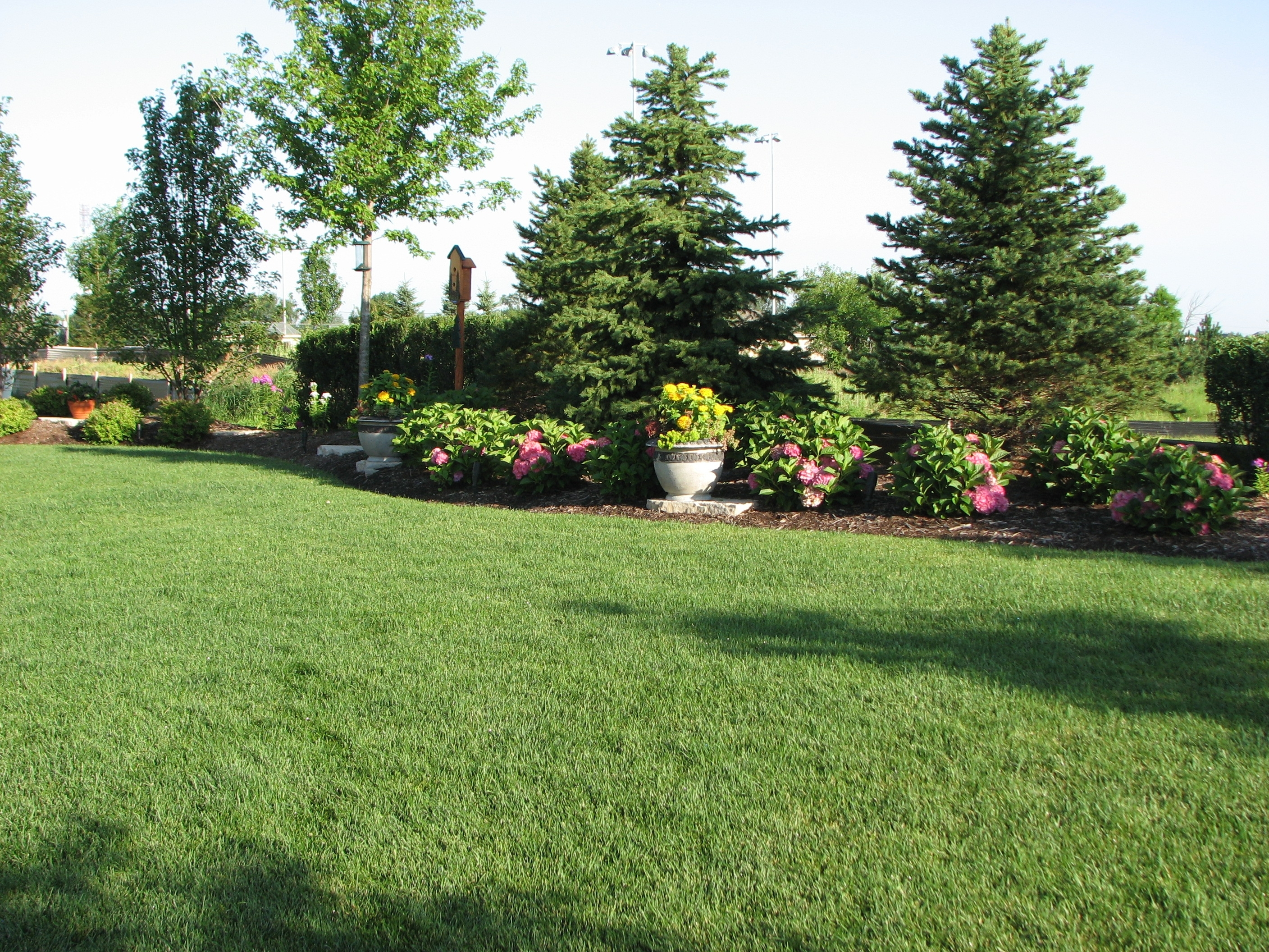 Florida Landscaping Ideas For Privacy In A Small Backyard within Backyard Garden Ideas For Privacy