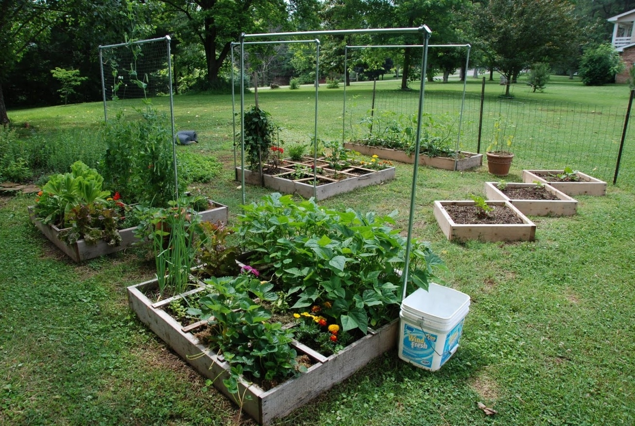 Garden Ideas : Backyard Vegetable Garden Ideas Best Outdoor And throughout Easy Backyard Vegetable Garden Ideas