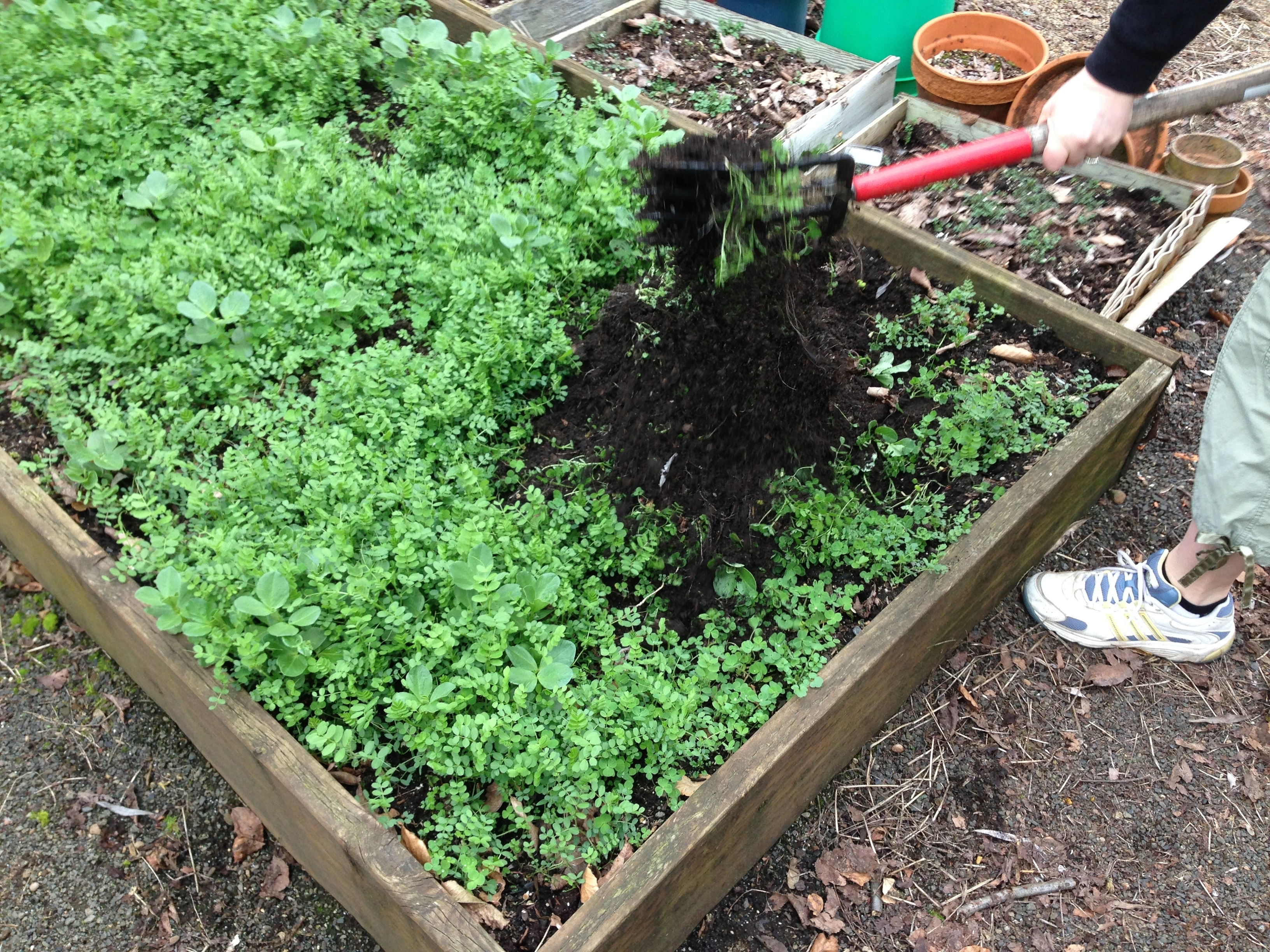 Gardening With Recycled Materials intended for Backyard Garden Cover Crop