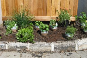 Herb-Garden-Design-Fcbo - Design On Vine for Small Backyard Herb Garden Ideas