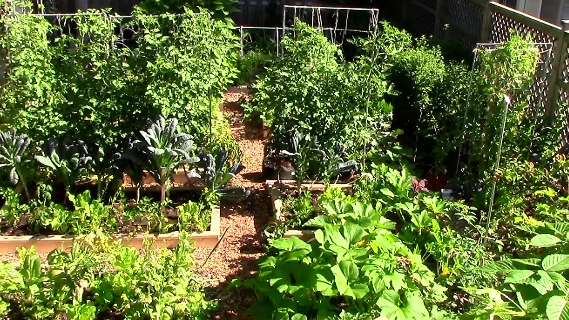How To Grow A Lot Of Food In A Small Garden - 9 Ez Tips - Youtube within Backyard Garden To Feed Family