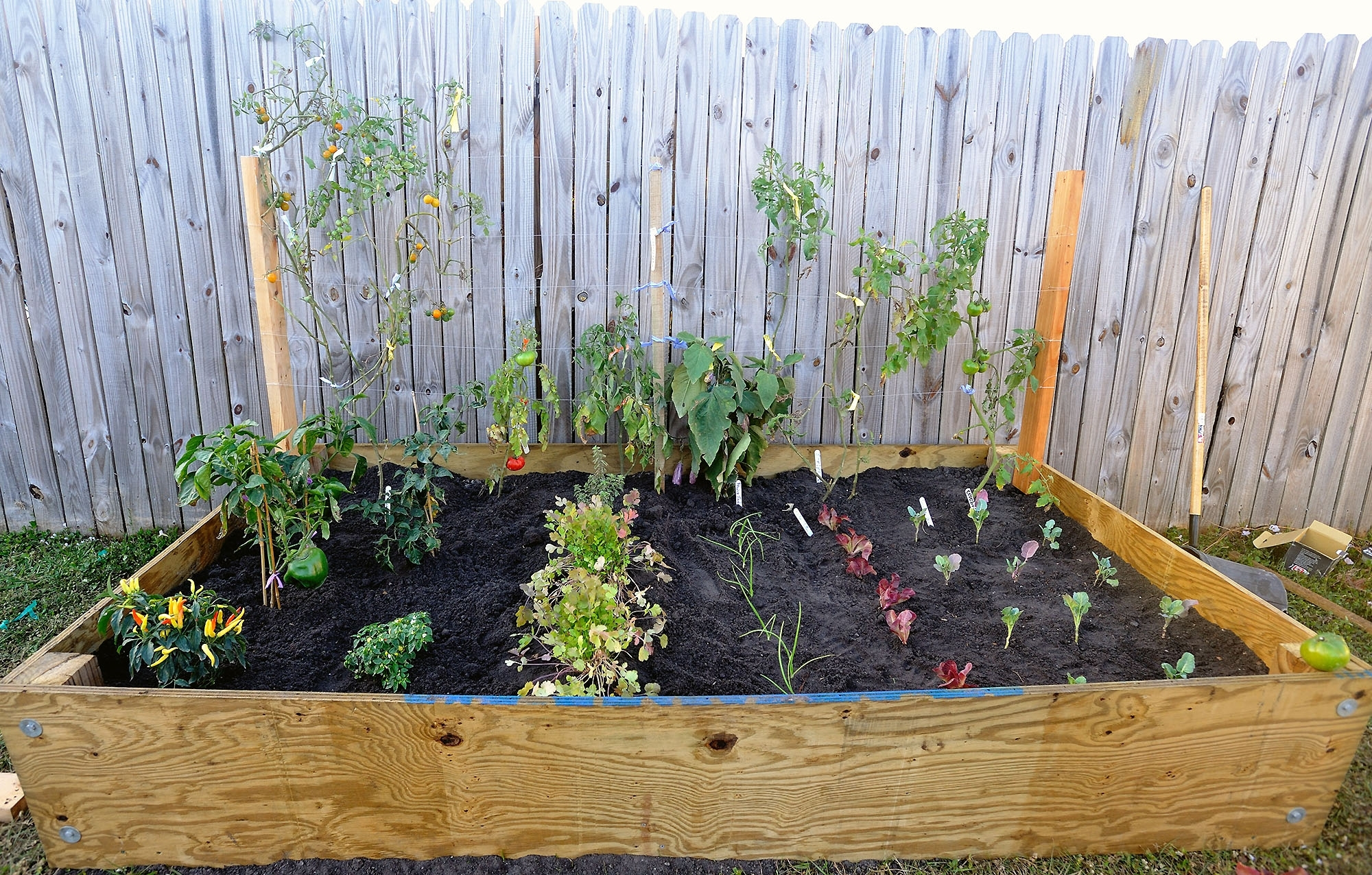 Involve Wooden Frames Vegetable Gardening In A Small Backyard   2048 in Florida Backyard Vegetable Garden Ideas