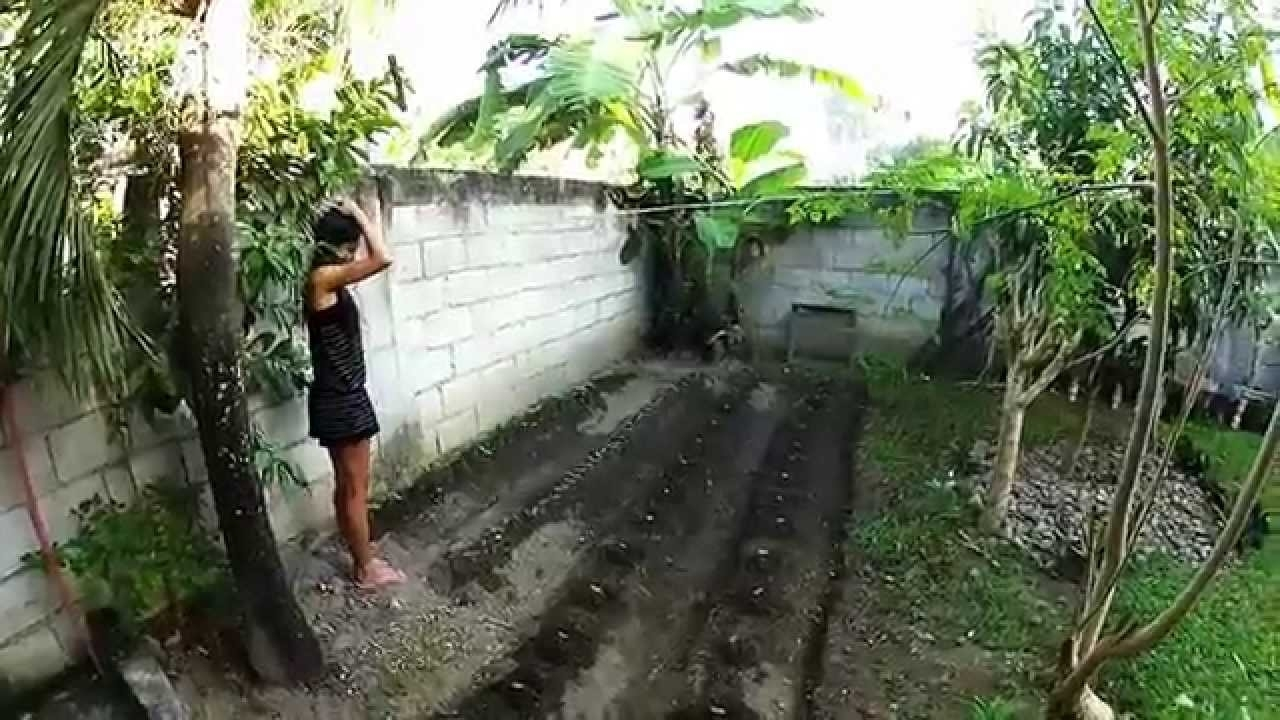 Our Philippine Backyard Garden Update - Philippines Expat - Youtube pertaining to Backyard Gardening In The Philippines