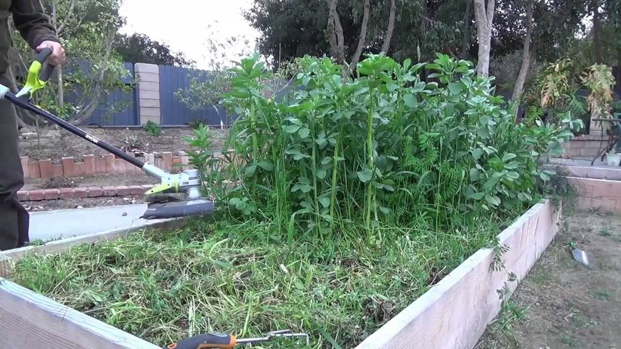 Raised Bed Cover Crops For Feed And Compost - Youtube regarding Backyard Garden Cover Crop