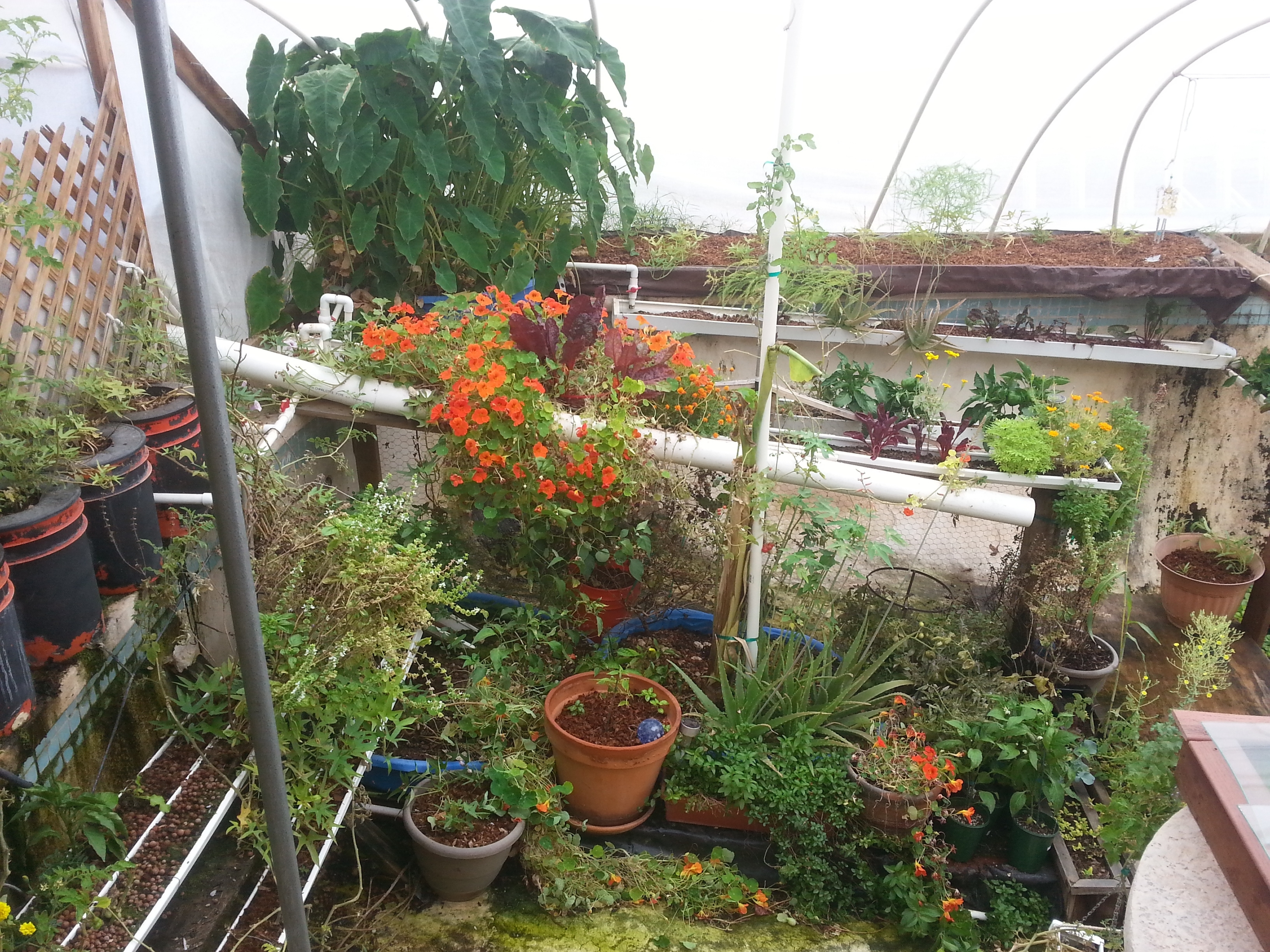 These Folks Feed Their Family With A Garden In Their Swimming Pool regarding Backyard Garden To Feed Family
