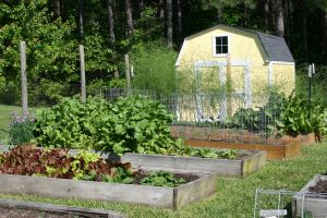 Vegetables Archives - Home Garden Joy with regard to Backyard Garden For Beginners
