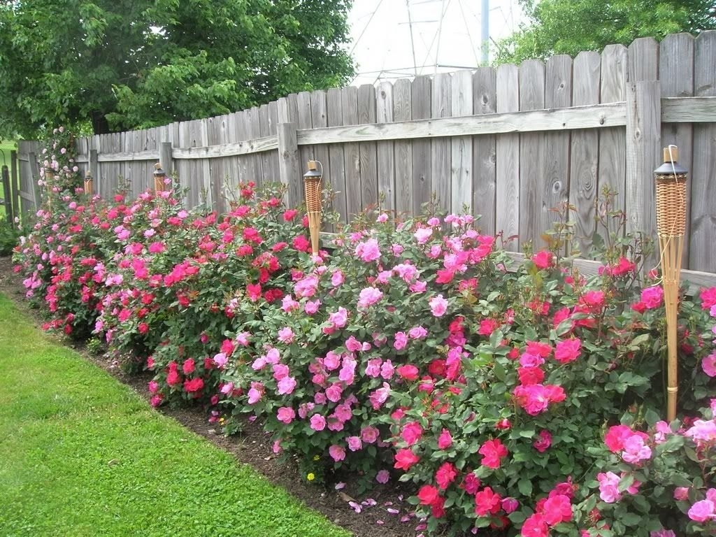 When To Trim Back Knockout Roses And How Much!! - Roses Forum intended for Rose Garden Ideas For Backyard