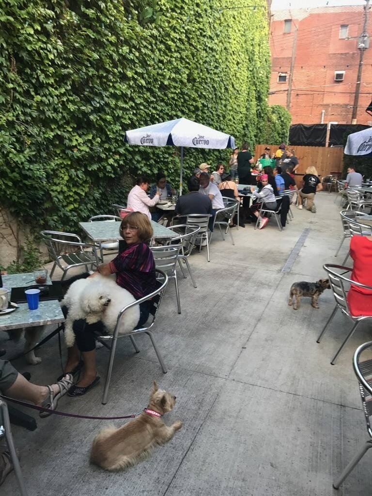 10 Dog-Friendly Bars We Love In Pittsburgh regarding Cafe And Dog's Garden House Village