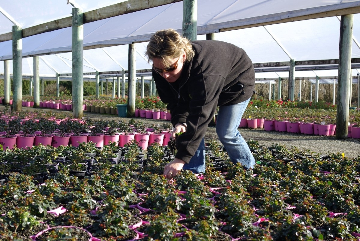 Nursery Grower/worker for Garden House Operates A Commercial Plant Nursery