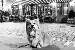 The Best Dog-Friendly Pubs In London | London Evening Standard inside The Garden House Marple Dog Friendly