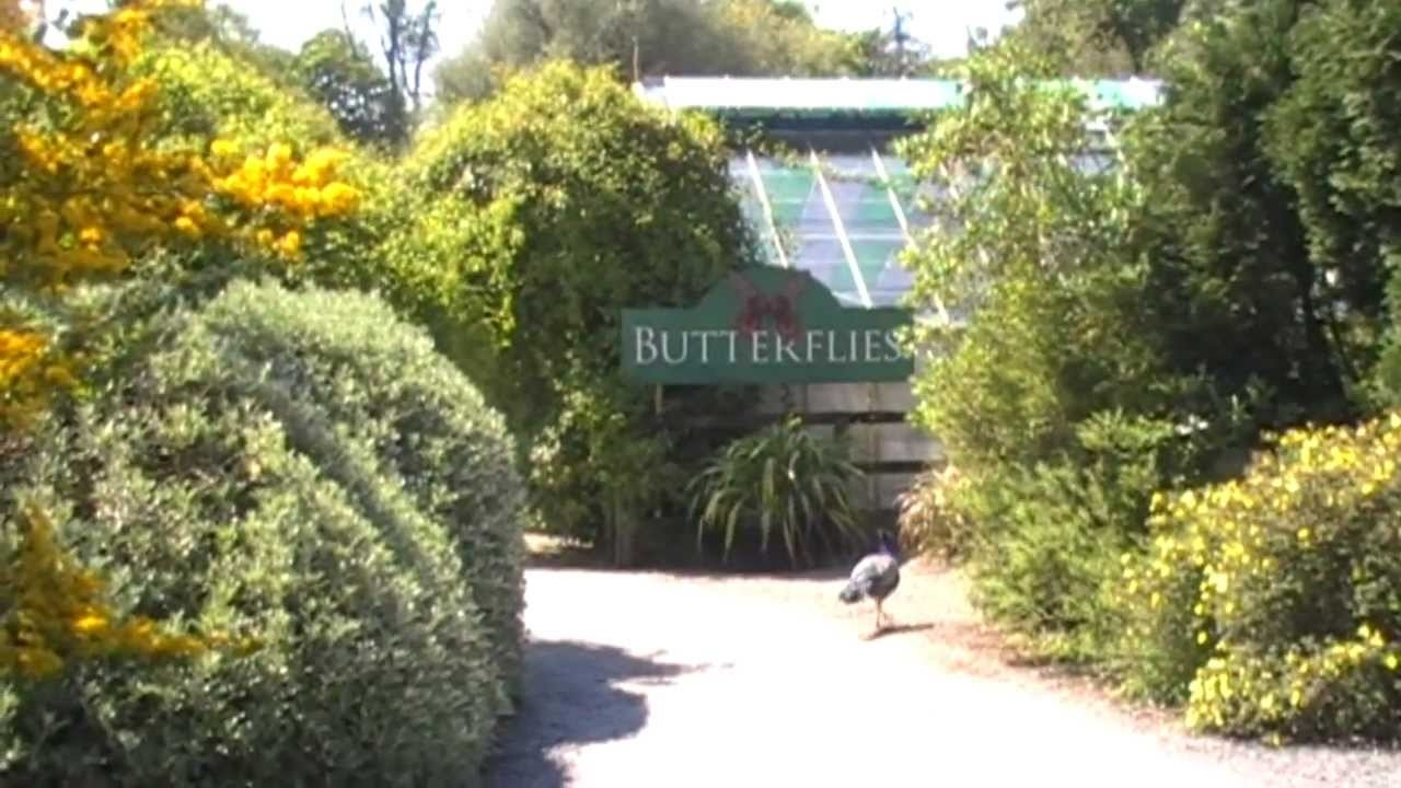 Tropical Butterfly House- Seaforde, Co.down, Northern Ireland - Youtube within The Garden House Cafe Seaforde
