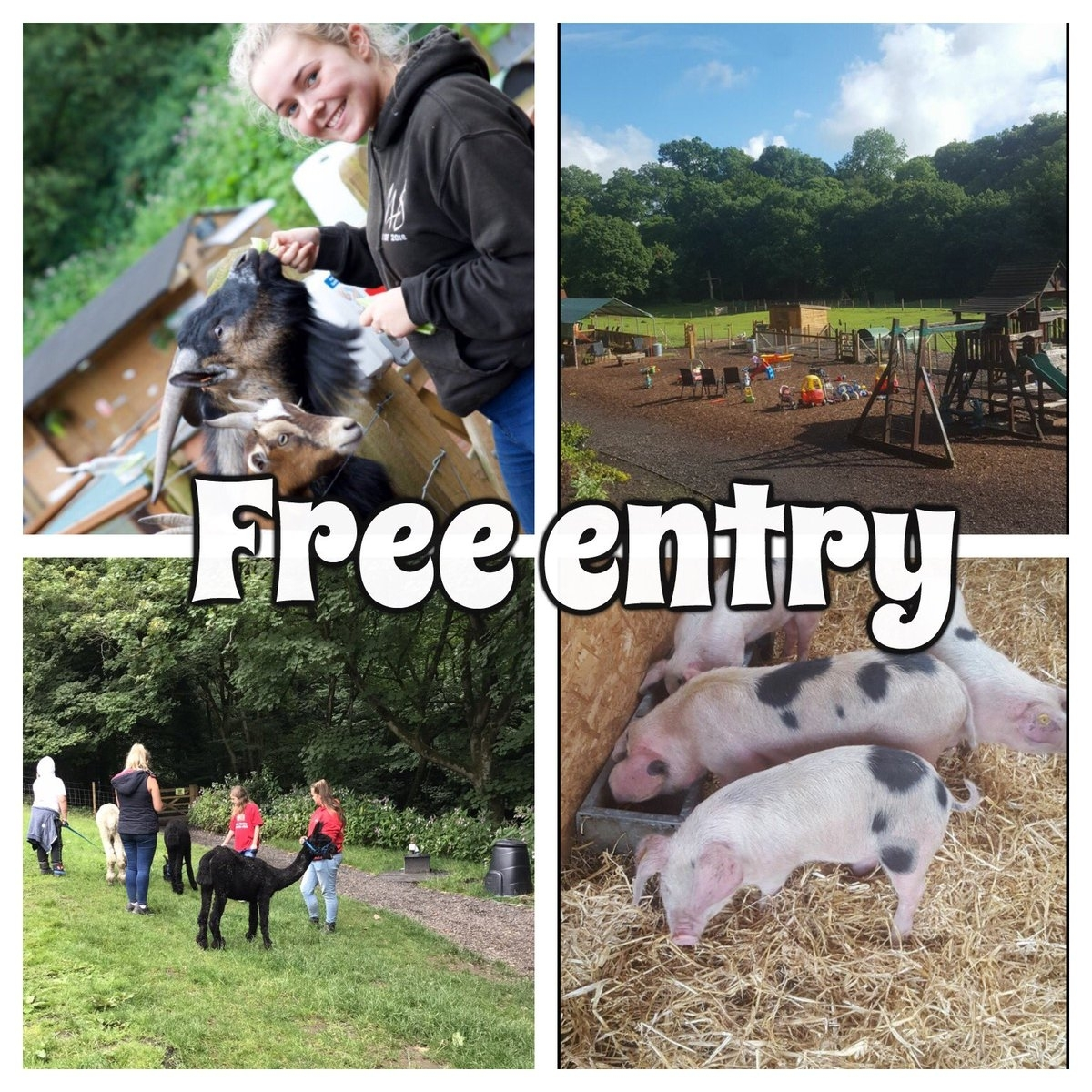 "Thegardenhousemarple On Twitter: ""☀️free Entry Community Farm Open pertaining to Garden House Petting Farm Marple"